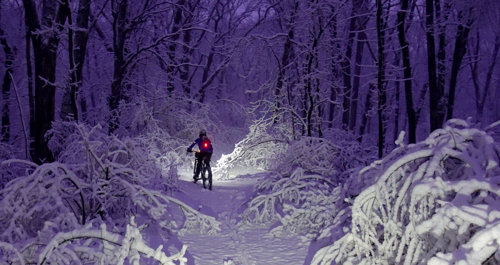 At 6am after an evening snowfall, the woods were spectacular to ride.