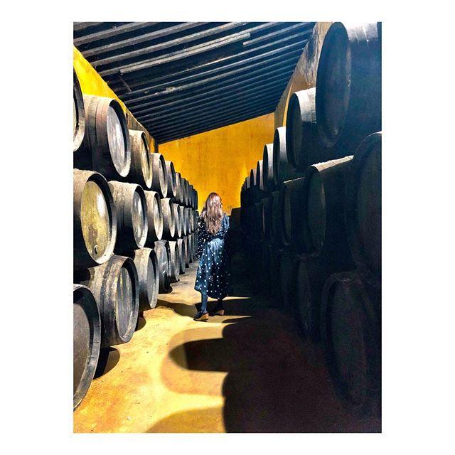 Vino de Jerez på Fernando de castilla = ⭐️⭐️⭐️⭐️⭐️