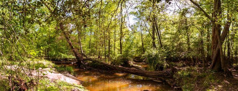 Yes, I used to live right next to the Beaver Creek in Apex, North Carolina. This was a mere 800 feet from the back of my house.