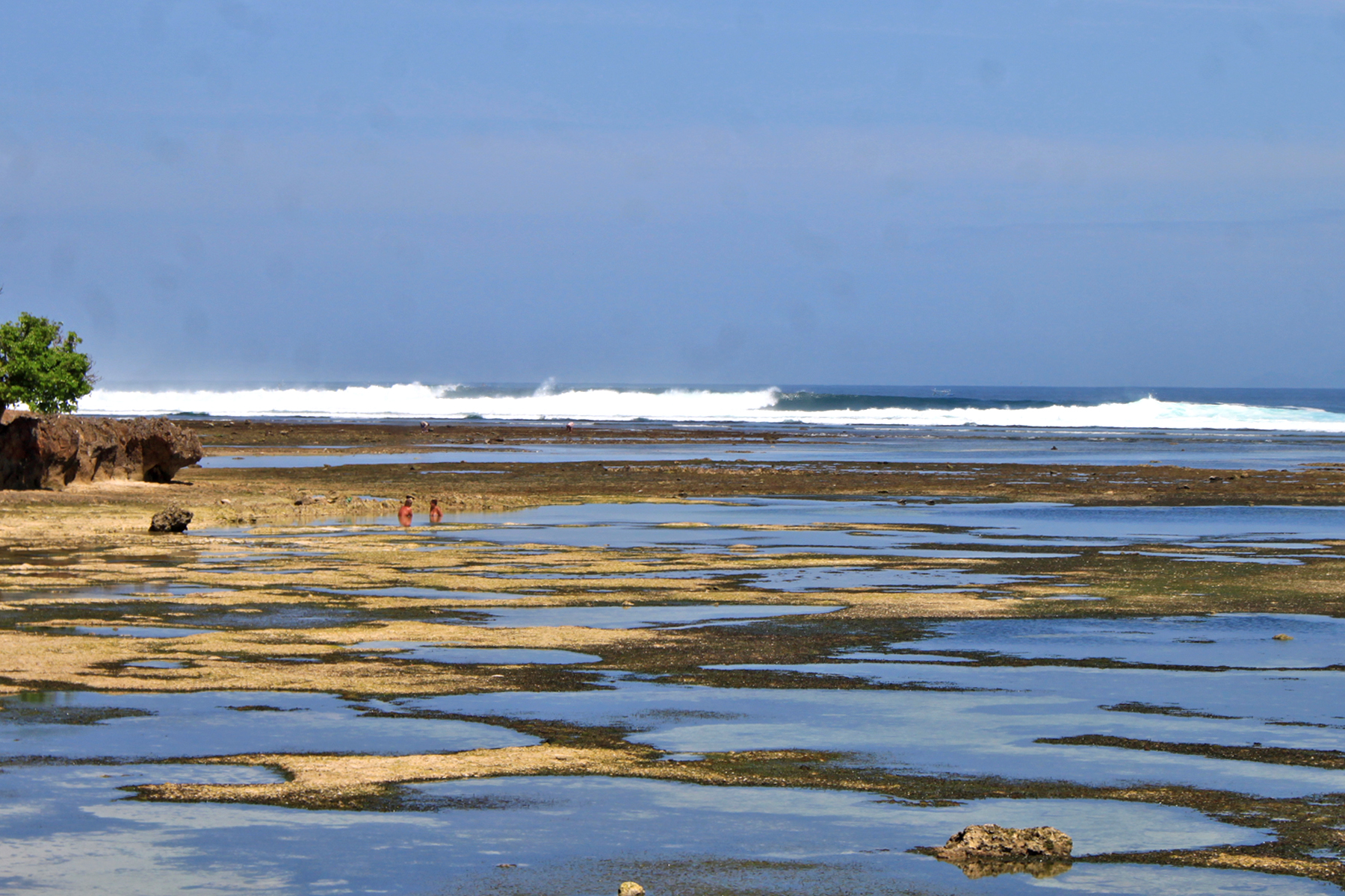 Tide Pools and Money Trees