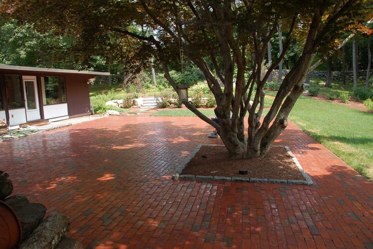 Brick Patio and Awesome Tree, Carlisle