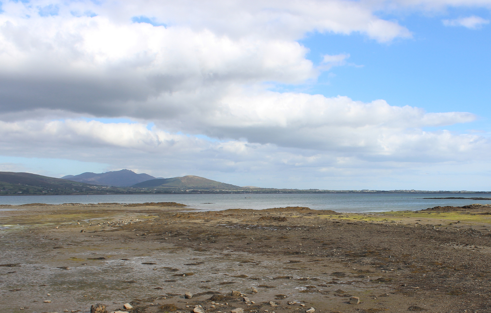 Low Tide, Carlingford