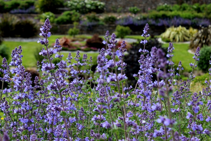 The gardens at Lisadell
