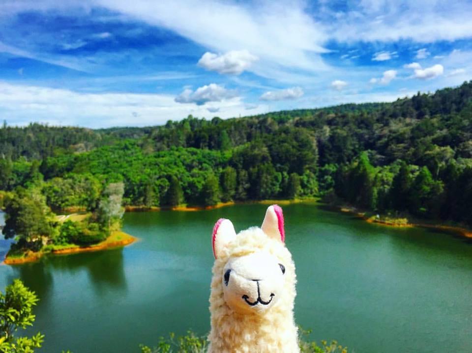llamawithnodrama-parque arvi colombia.jpg