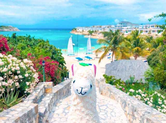 """Let the sea set you free."" 🌊 Happy Friday humans! 💙@antiguaandbarbuda @traverseevents #llamawithnodrama #whatcoollookslike #loveantiguabarbuda"