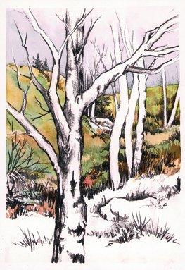 """Aspens,"" 9x12, Original Graphite Watercolor Painting by Paula Wilson-Caziér / Honey Tree Studios"