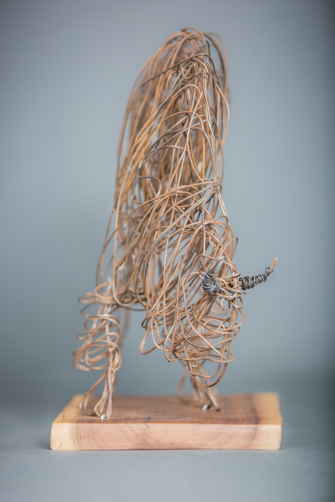 Bison bailing wire sculpture, 12 X 15 inches, 2018, by Celeste Havener