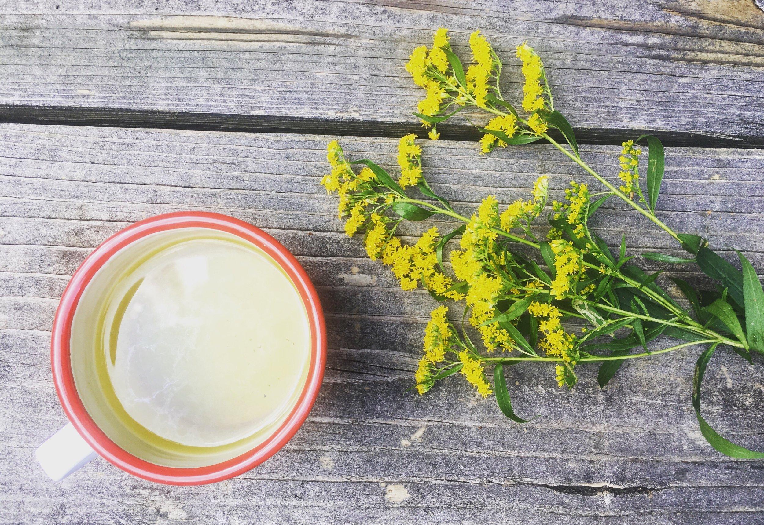 Foraged Goldenrod Tea