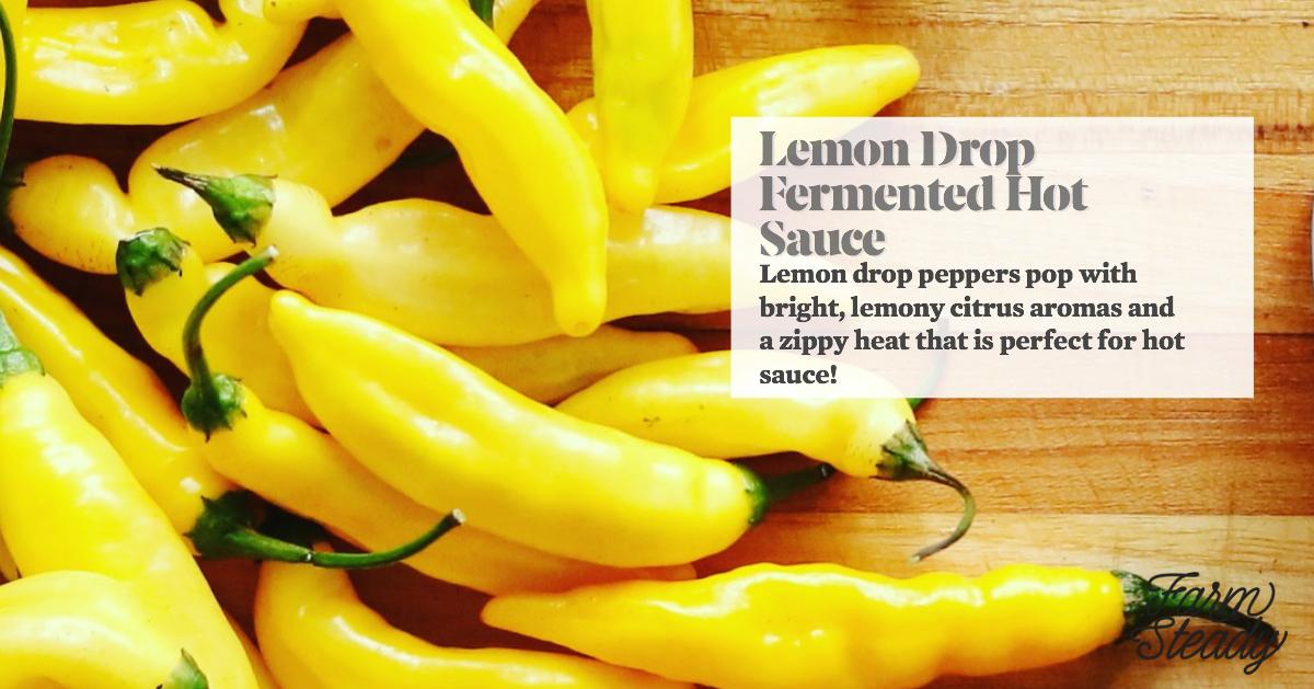 Lemon Drop - Facebook.jpg