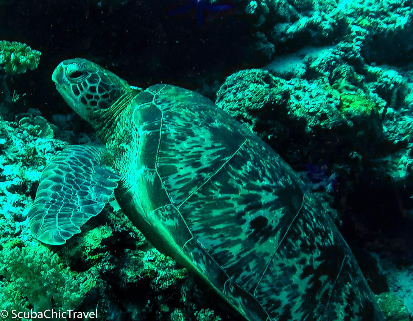 Turtle Panglao