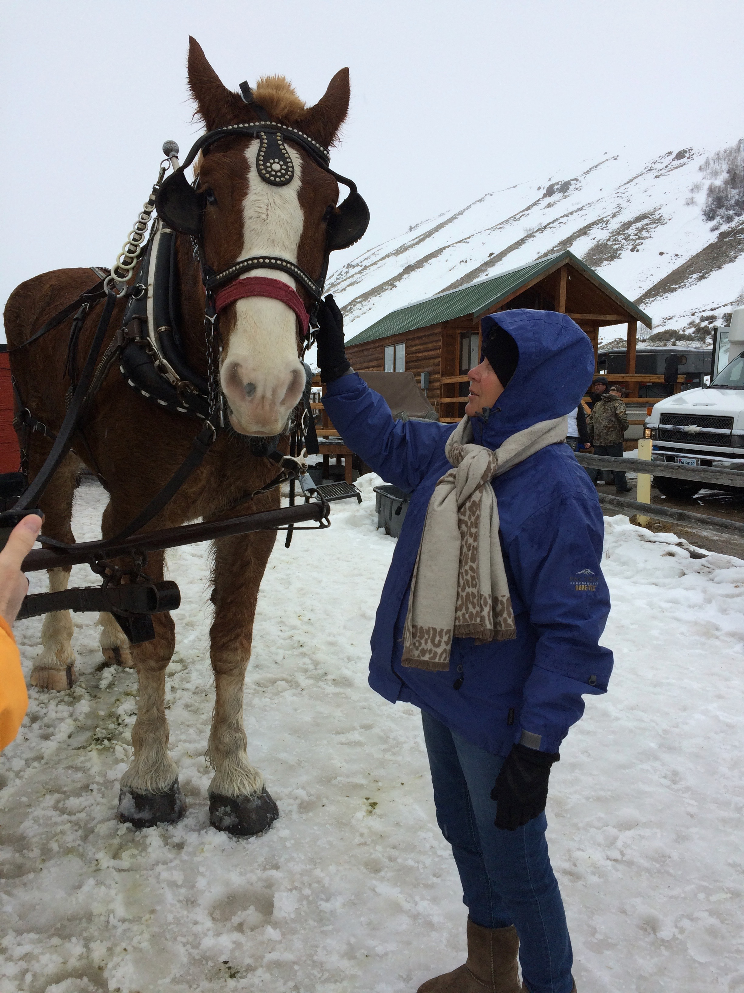 horse-drawn sleigh rides in the elk refuge