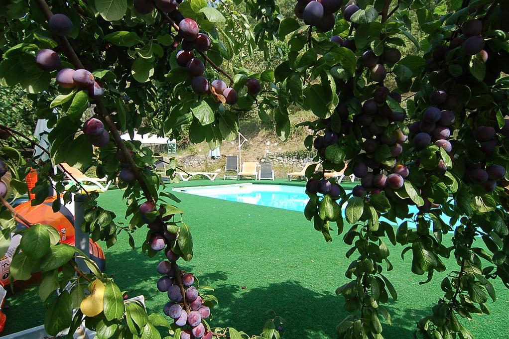 Twin-Garden-View.png