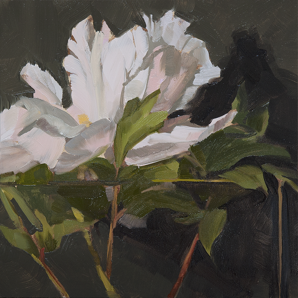 Peony II, oil on panel, 8x8in.