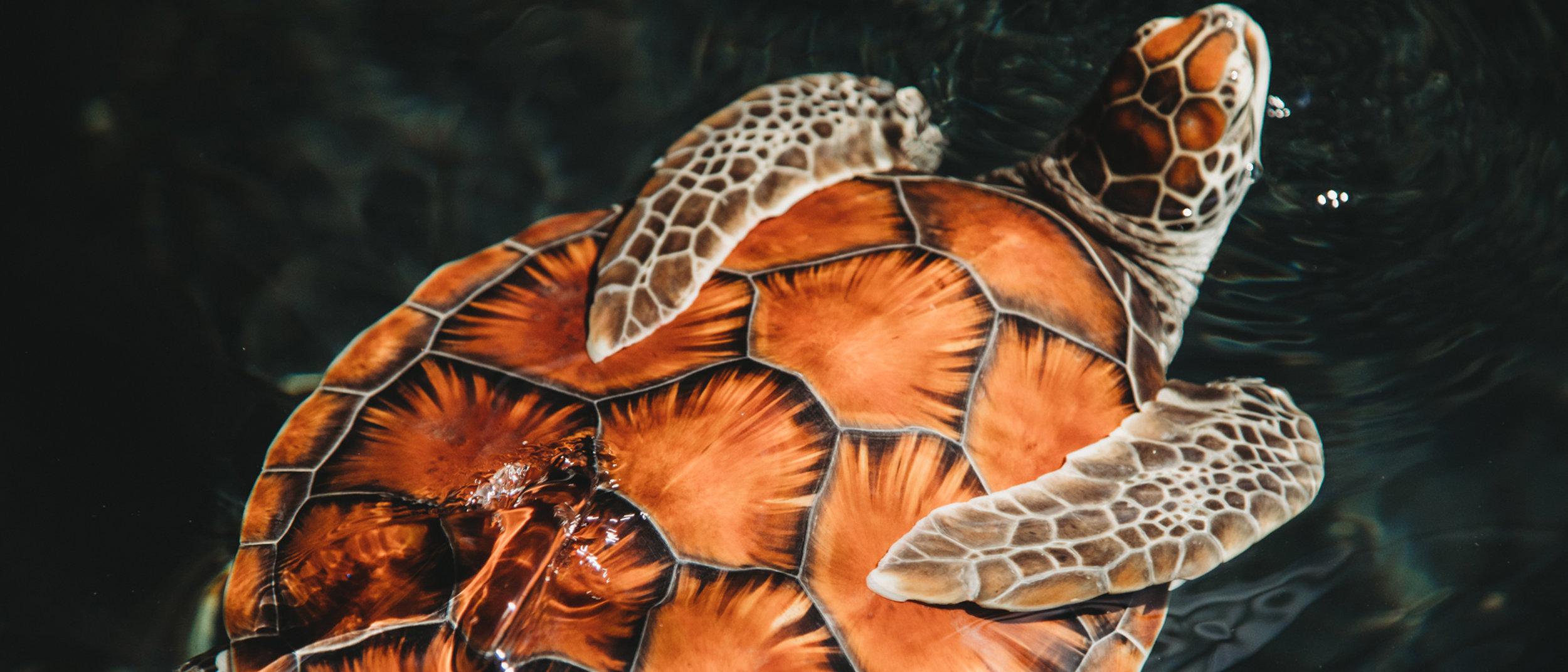 Malama Honu - Mauna Lani, Auberge Resorts Collection