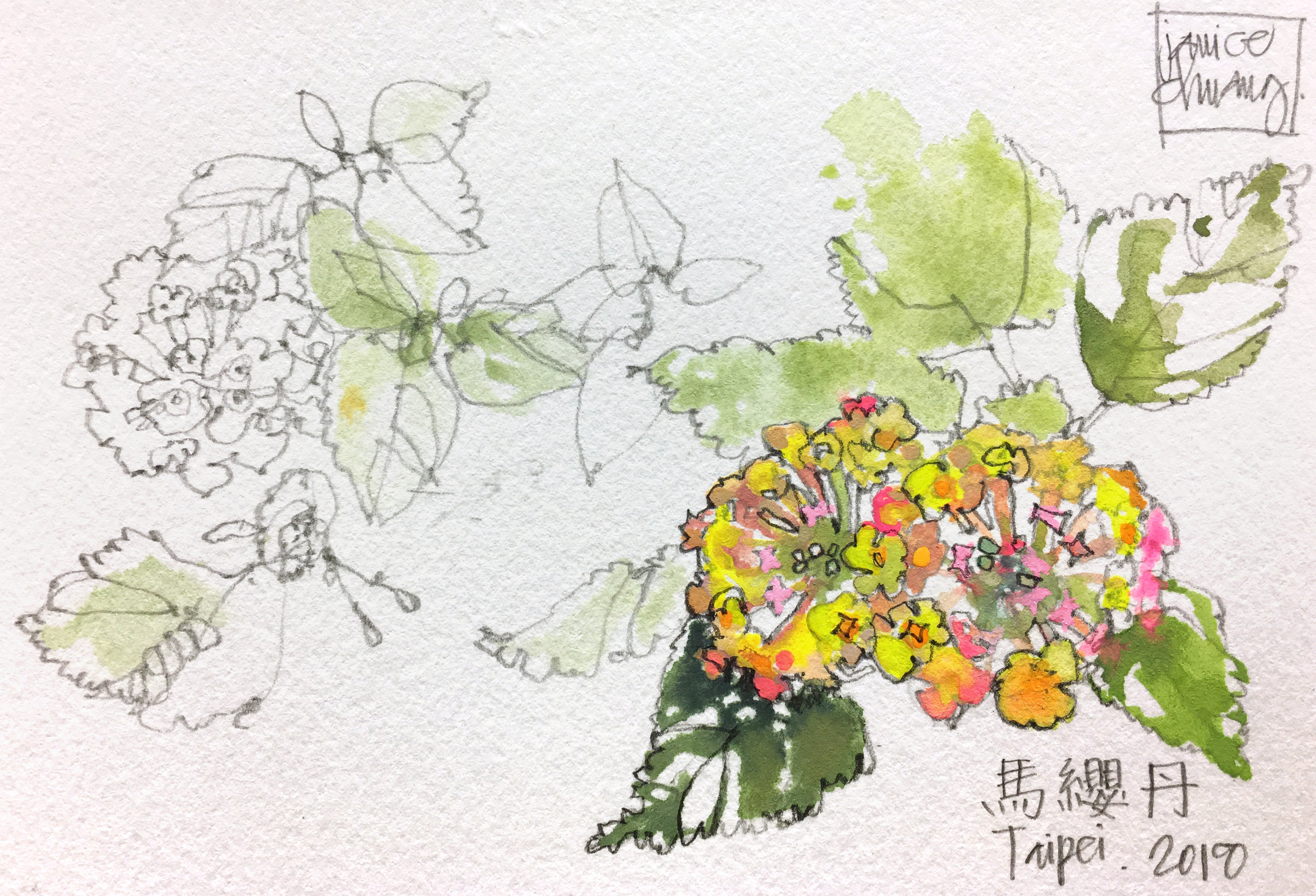 Lantana Flowers.jpg