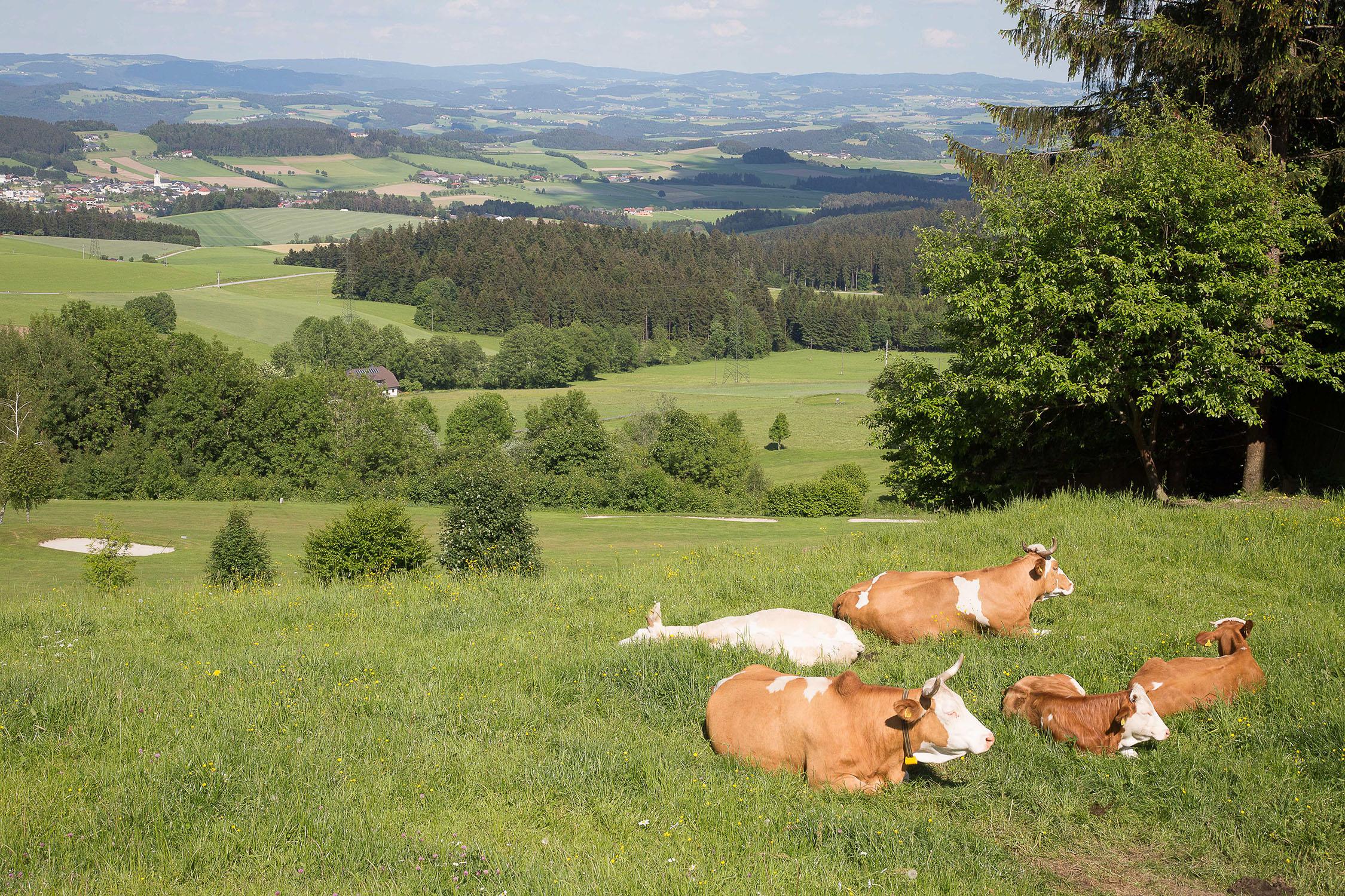 landscape-grass-farm-lawn-meadow-cattle-web.jpg