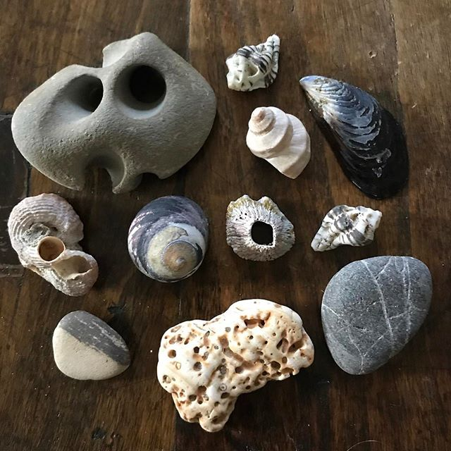 Shapes and forms#naturesculptures #shells#rocks#forms#shapes#beachwalk#pointreyes
