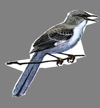 mockingbird-logo.png