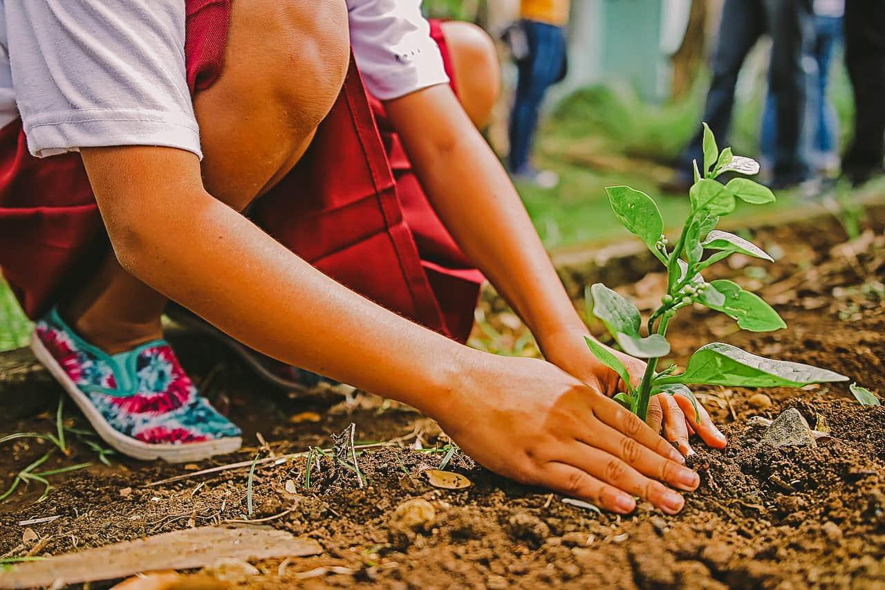 planting-1898946_1280-min (1).jpg