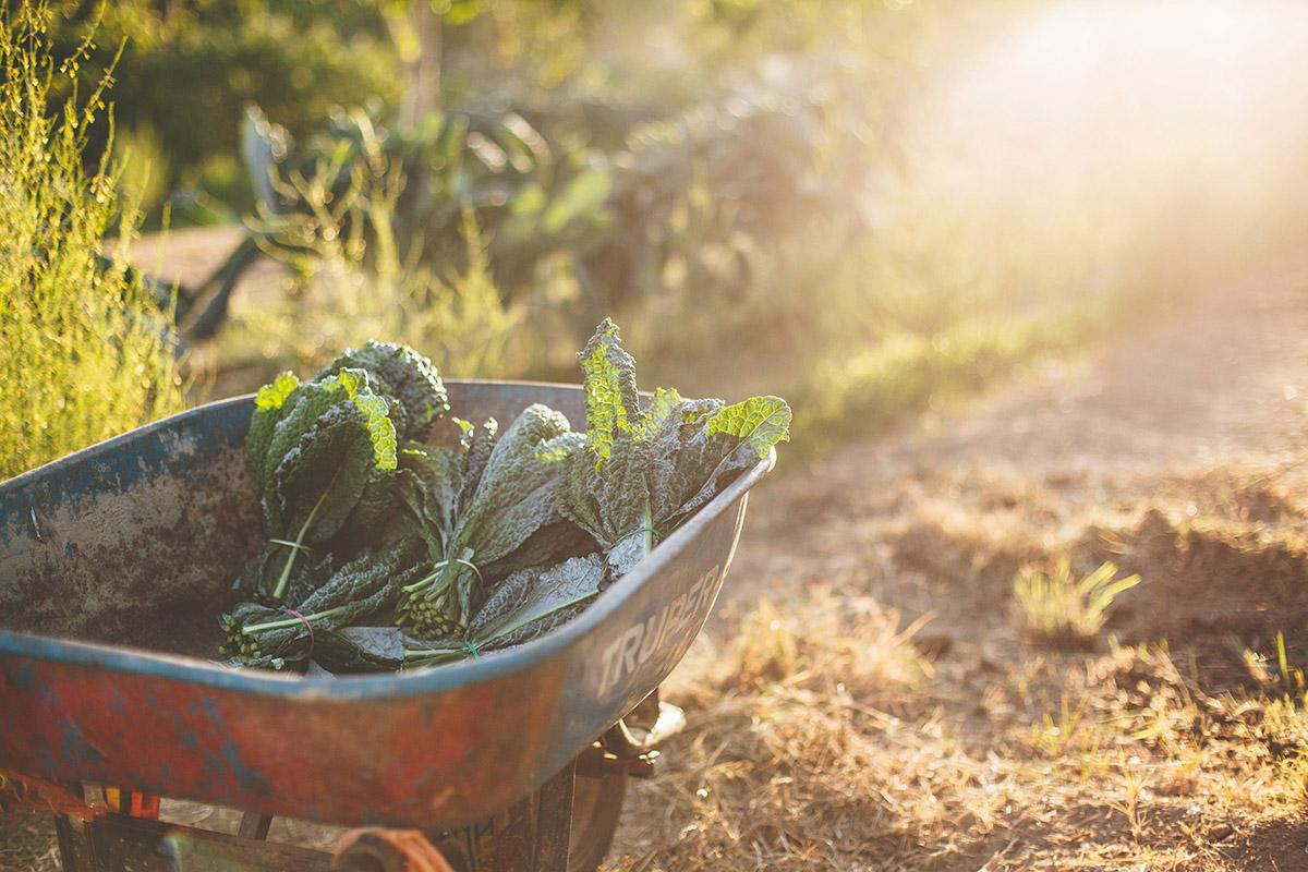 Flora-Farms-Private-Gardens-02.jpg