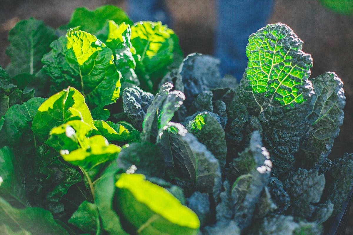 Flora-Farms-Private-Gardens-07.jpg