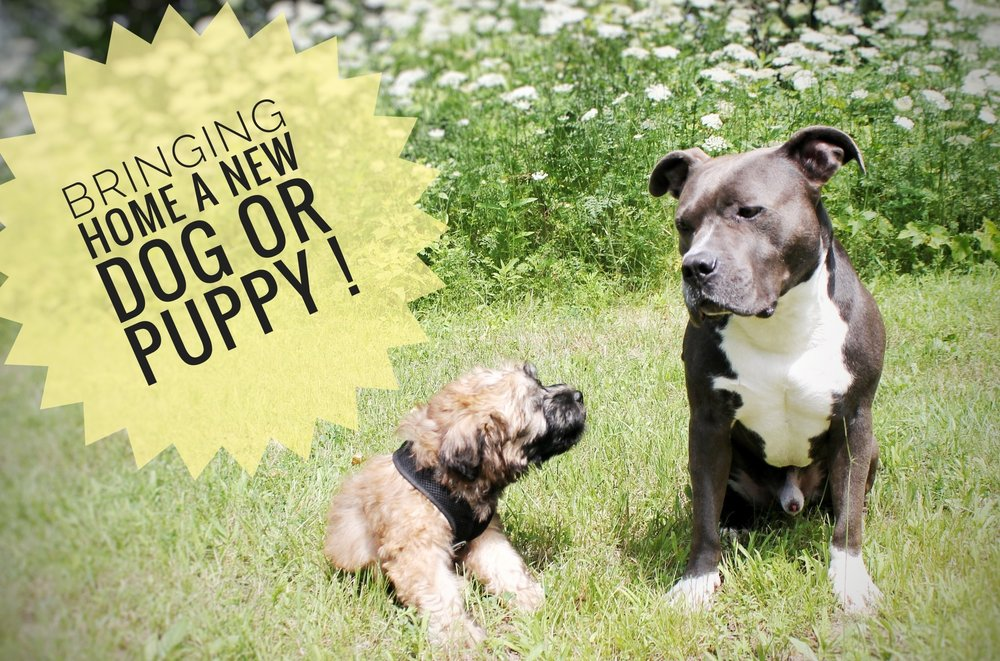 BRINGING HOME A NEW DOG OR PUPPY! — NORTH COUNTRY K9 CREW