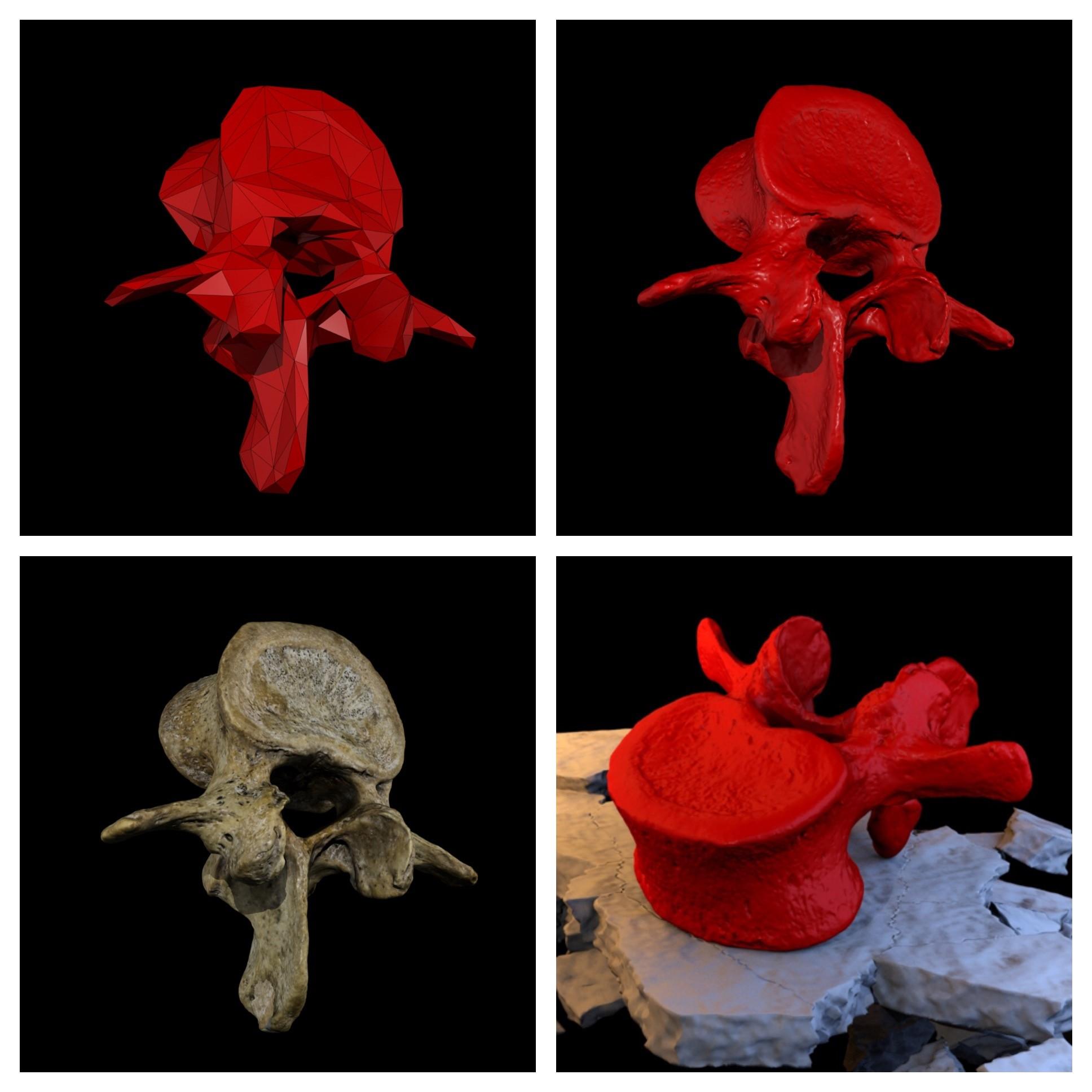 Renders of the Lumbar Vertebrae Reconstruction1.jpg