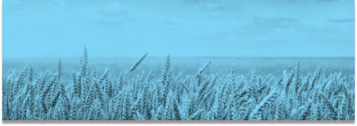 Blue Grain Fieldv2.png