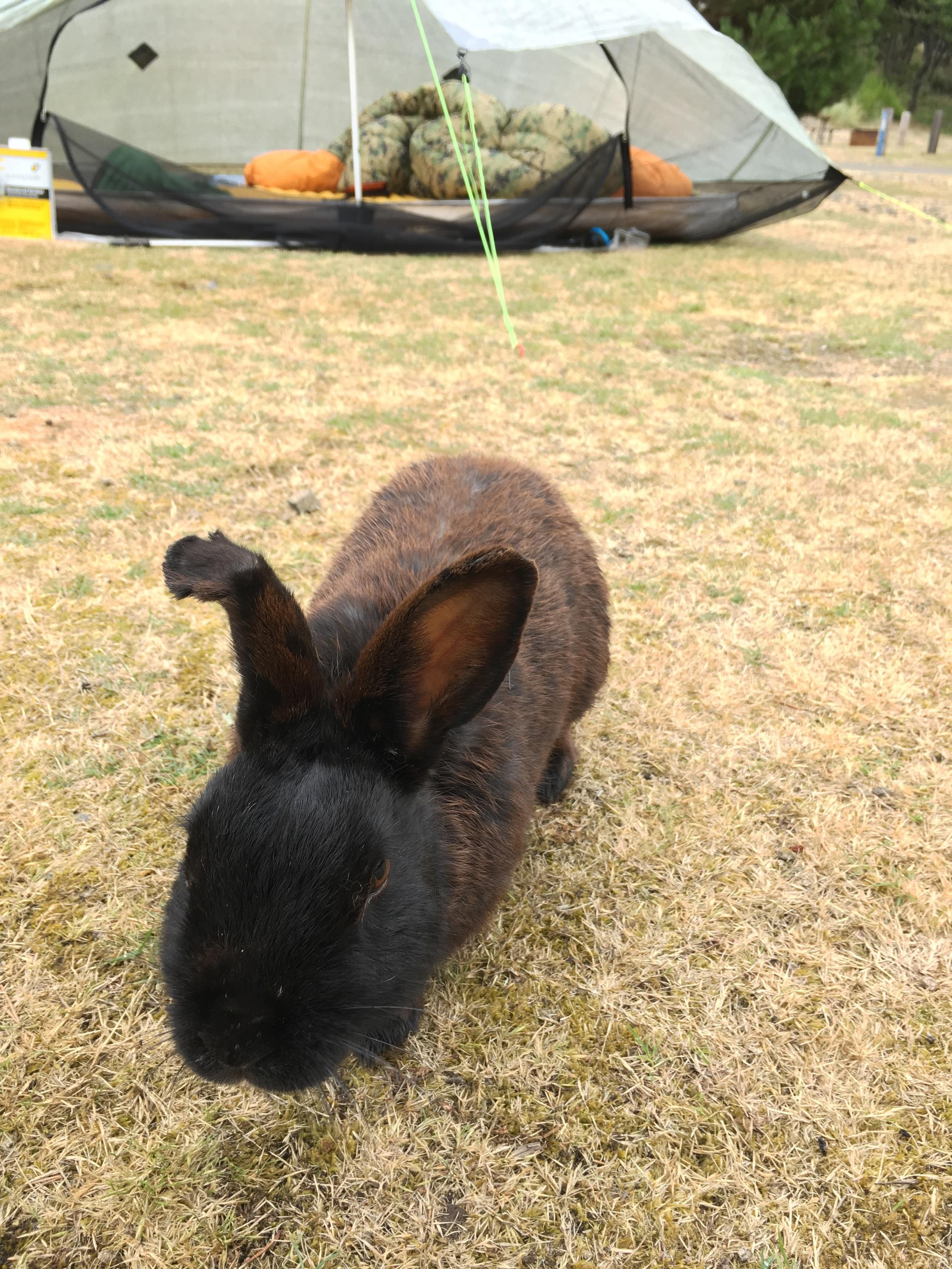 Broken ear bunny friend.