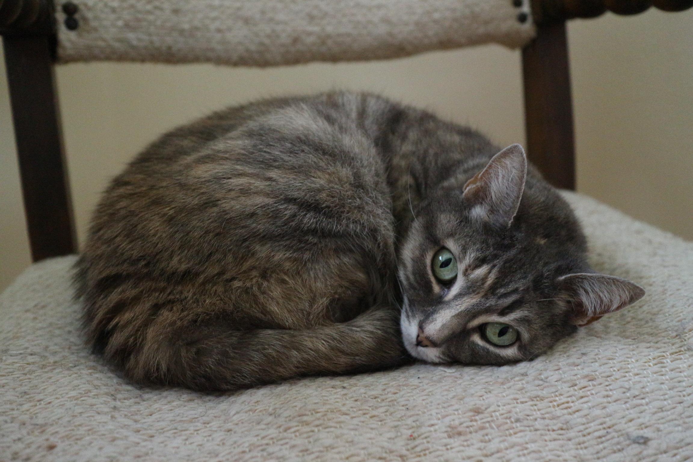 Ellie, the cute little cat bean.