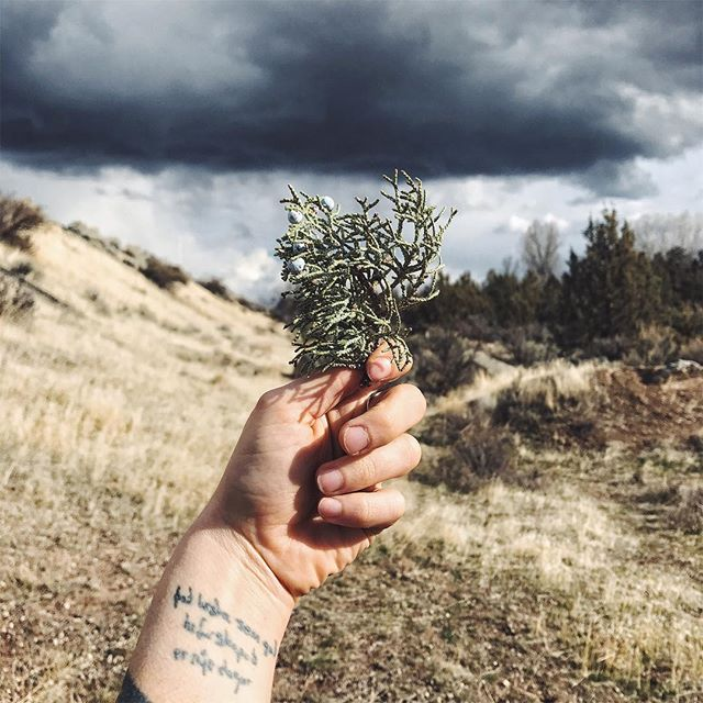 I want us to be imbued, by the land. . Buried in our skin. . Taking three steps back. . Letting the Devil catch me when I fall. . & he teaches me to find so many stars, also fallen: all scattered in the dirt. . . . . . #juniper #desertsky #desert #easteroregon #storm #devillessons #thedevil #mystic #crossroads #fallenstars #mercuryretrograde #aries #ariesseason #myheart #riverlessons #ethericcurrents