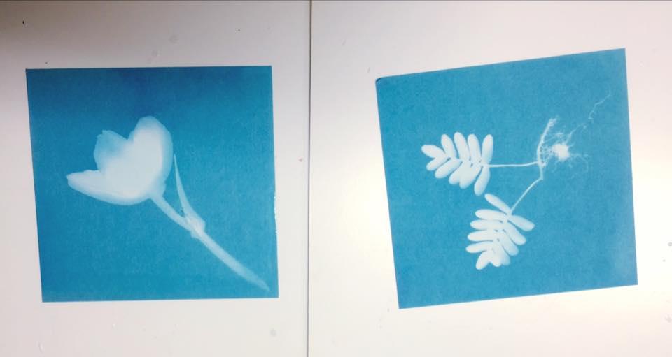 sunprints5.jpg