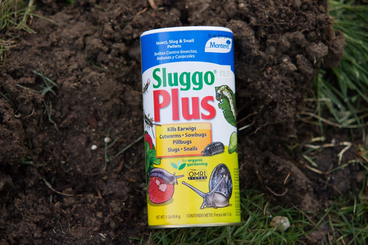 Sluggo Plus saved our flowers last year, even when it seemed daunting. These pelleted iron phosphate + spinosad combo works really well and goes a long ways!