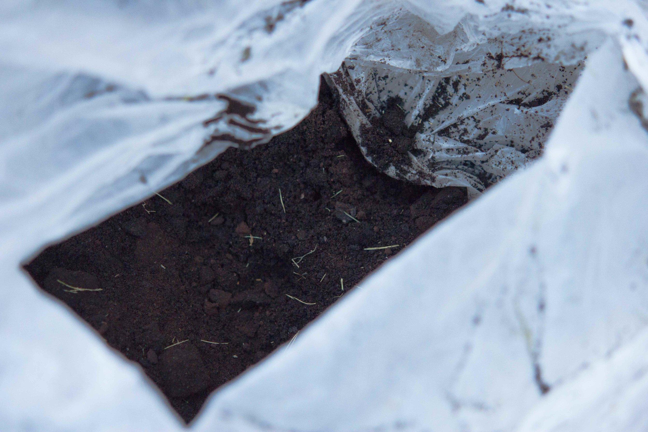 compost.4.jpg