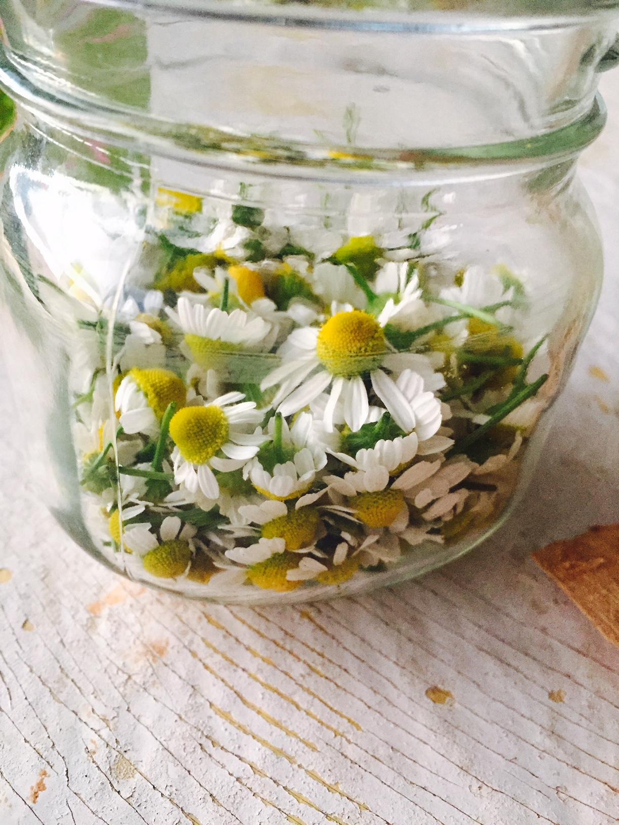 chamomileinjar.jpg