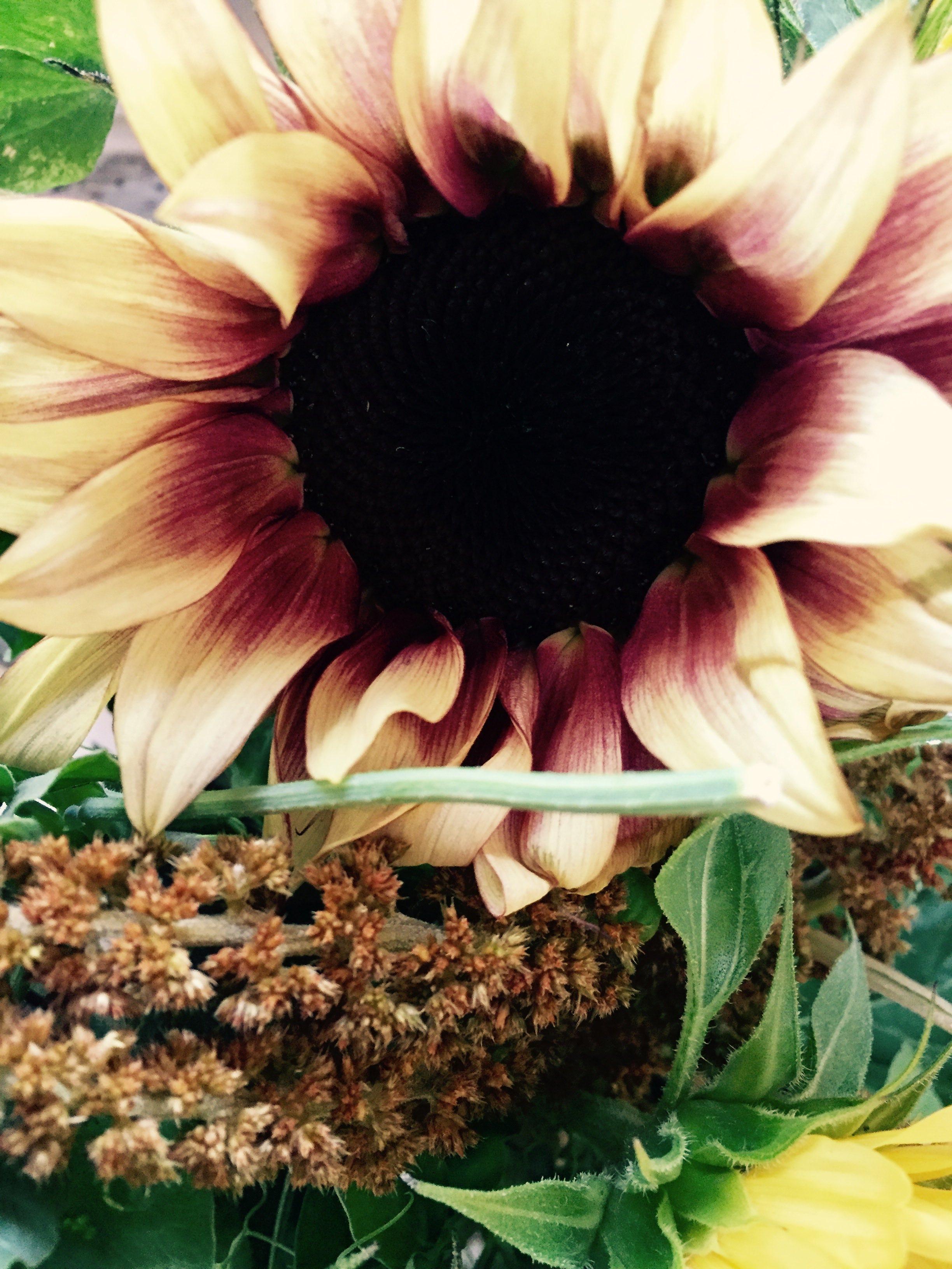 sunflowerplum.jpg