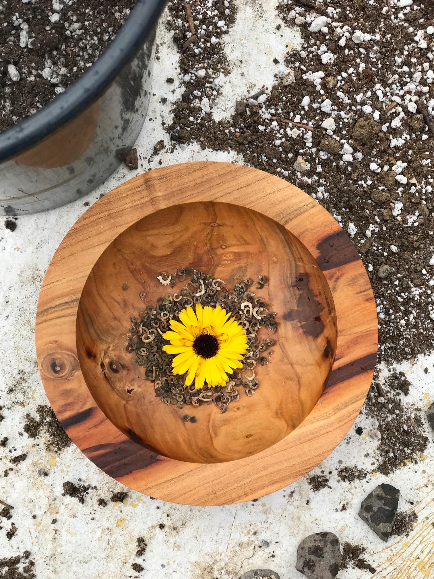 Calendula Seed.jpg