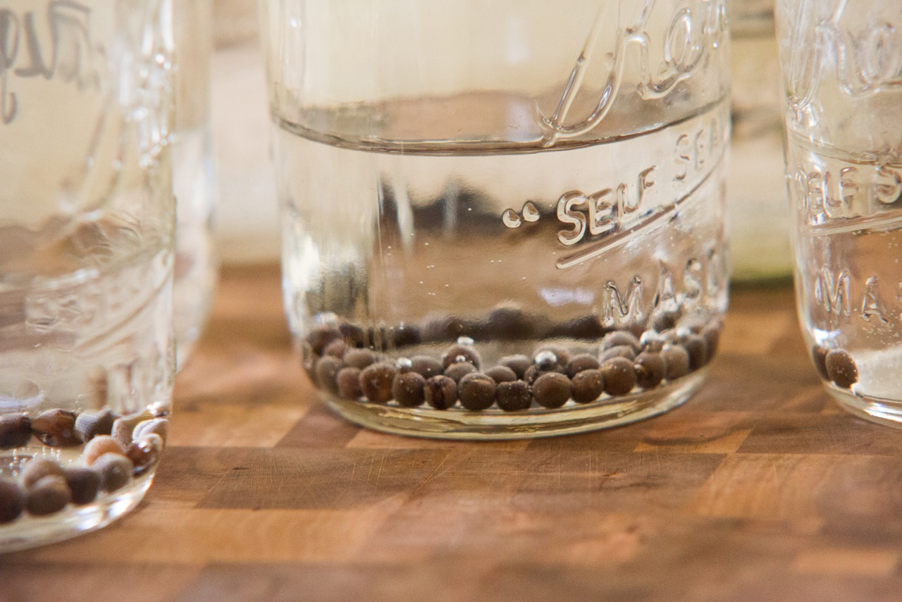 Presoaking sweet peas in room temperature water for 8-12 hours will help them to germinate faster.