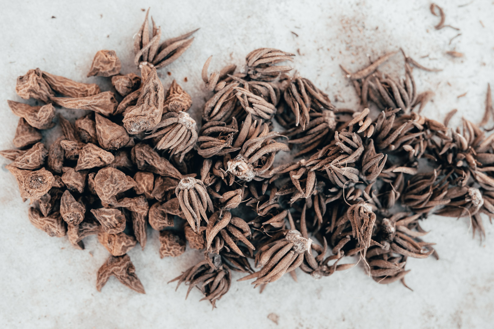 corms on cement.2.jpg