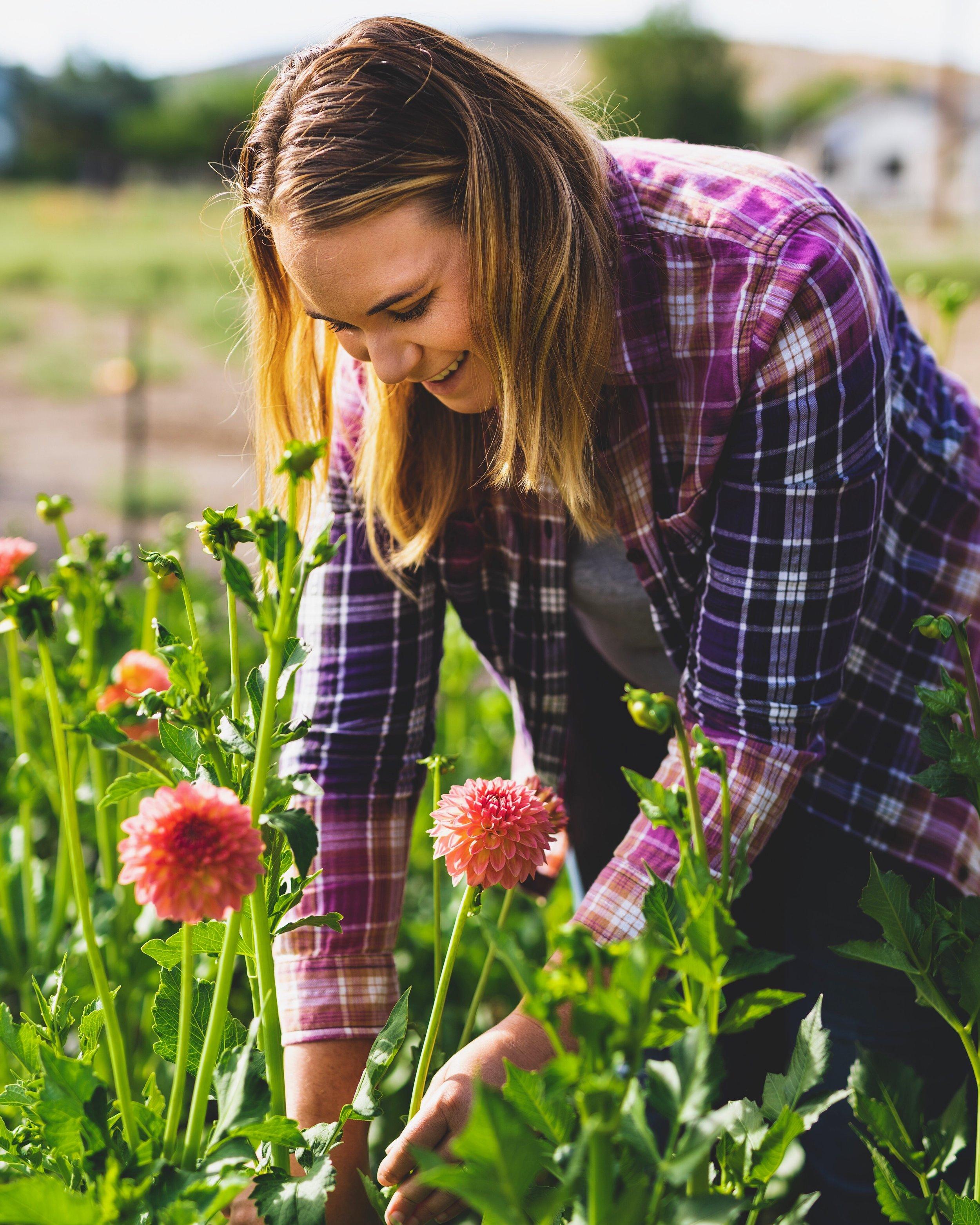 Jess harvesting dahlias 2019.JPG