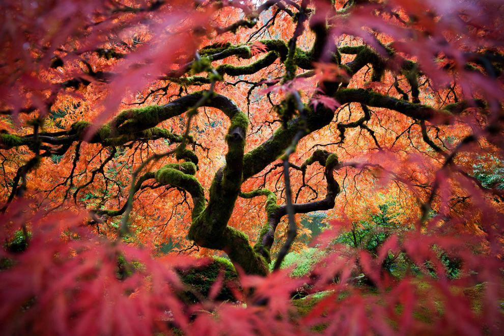 Japanese maple tree in the Portland Japanese Gardens by Fred An - National Geographic Traveler Photo Contest.    Reminds me of  The Fountain , beautiful shot.   (via  Winners: National Geographic Traveler 2012 Photo Contest - The Big Picture - Boston.com )