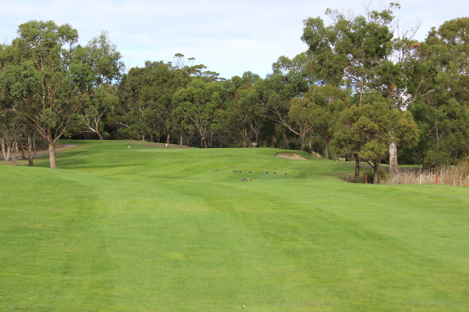 Hole 8    A straight hole with a narrow entry between two large dams at the 100 metre mark hitting up to a large elevated but sloping green.    Men: 436 metres, Par 5, Stroke Index 7/25   Ladies: 371 metres, Par 5, Stroke Index 5/23