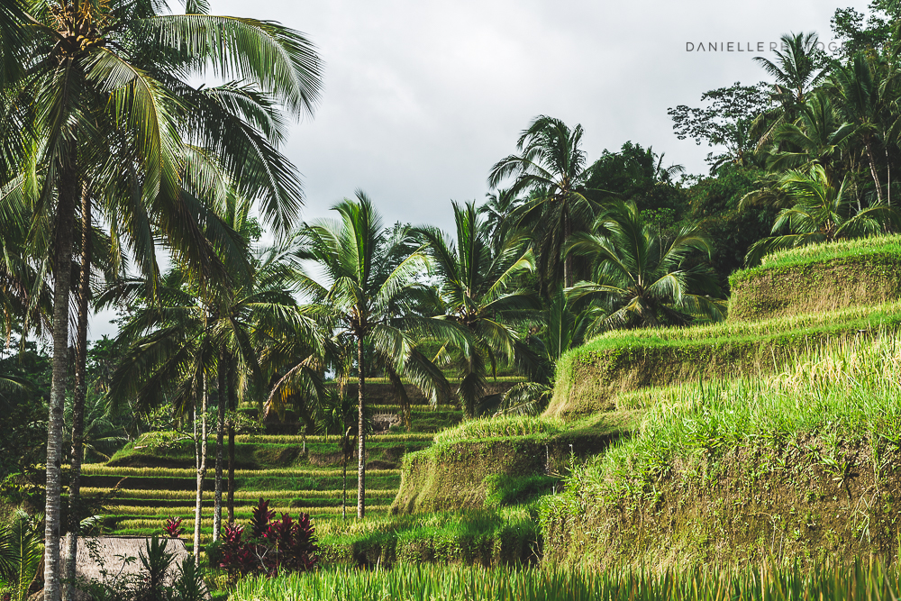 Danielle_Photography_SA120-Indonesia.jpg