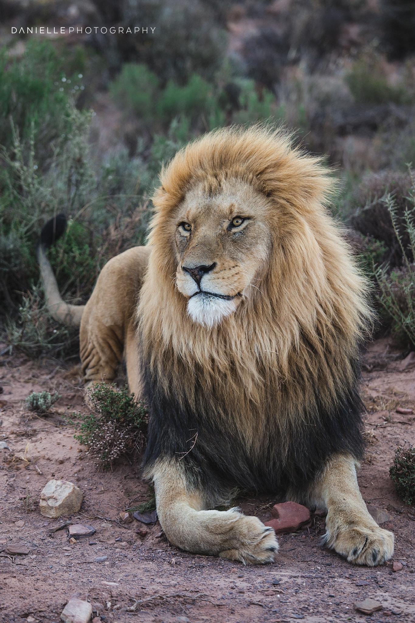 @DaniellePhotographySA_SOUTH AFRICA4.jpg