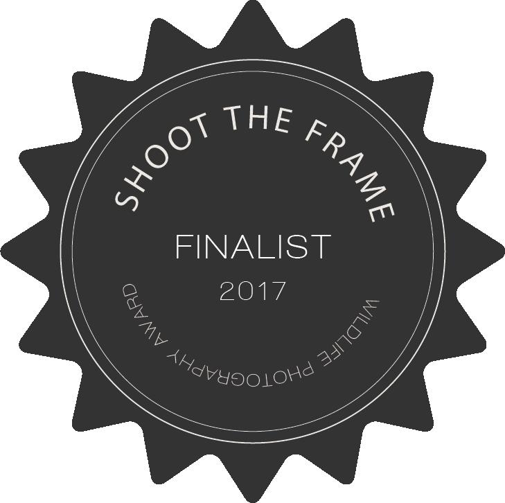 shoot_the_wild_finalist_badge_2017.png
