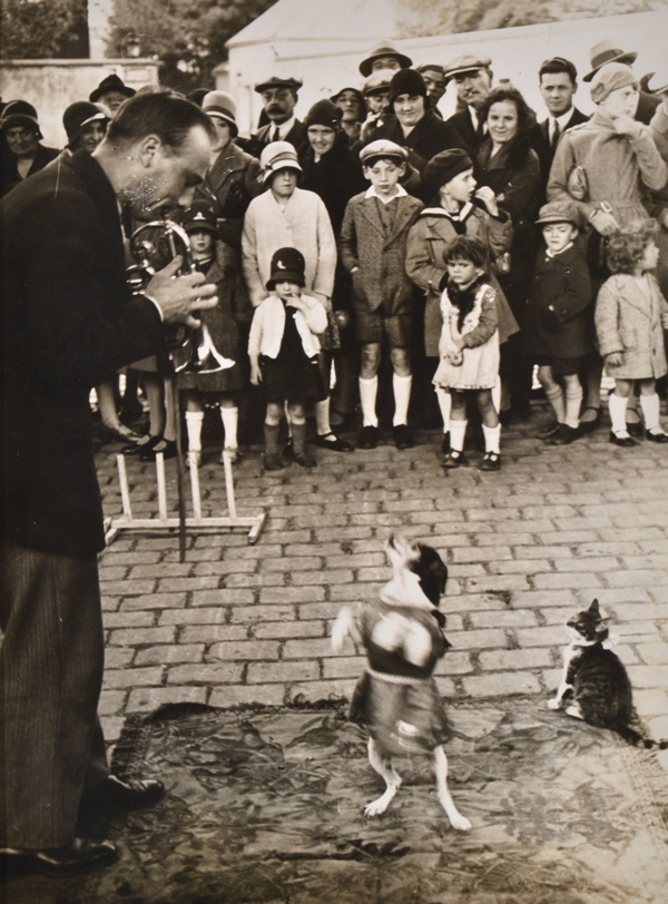 Brassai (Gyula Halasz 1899-1984), Performing Dog 1930's, Silver gelatin print.