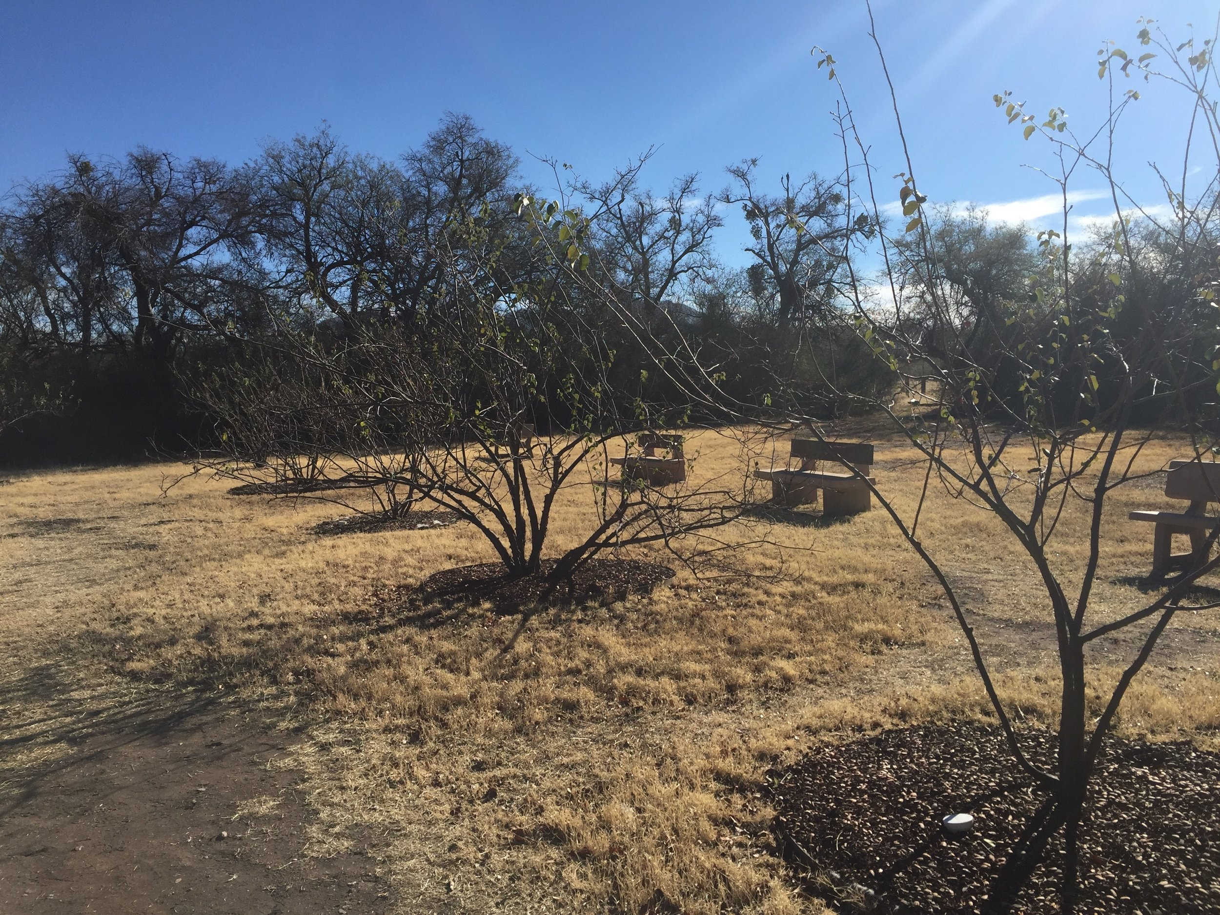 Tumacácori was one of the first sites to revitalize a mission orchard with fruit trees from the Kino Heritage Fruit Trees Project.