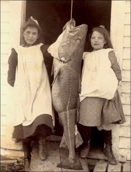 Girls with Codfish, ca. 1905,Photographer unknown. Reproduced with the permission of the Maritime History Archive (PF-315.222), Memorial University of Newfoundland, St. John's, NL.