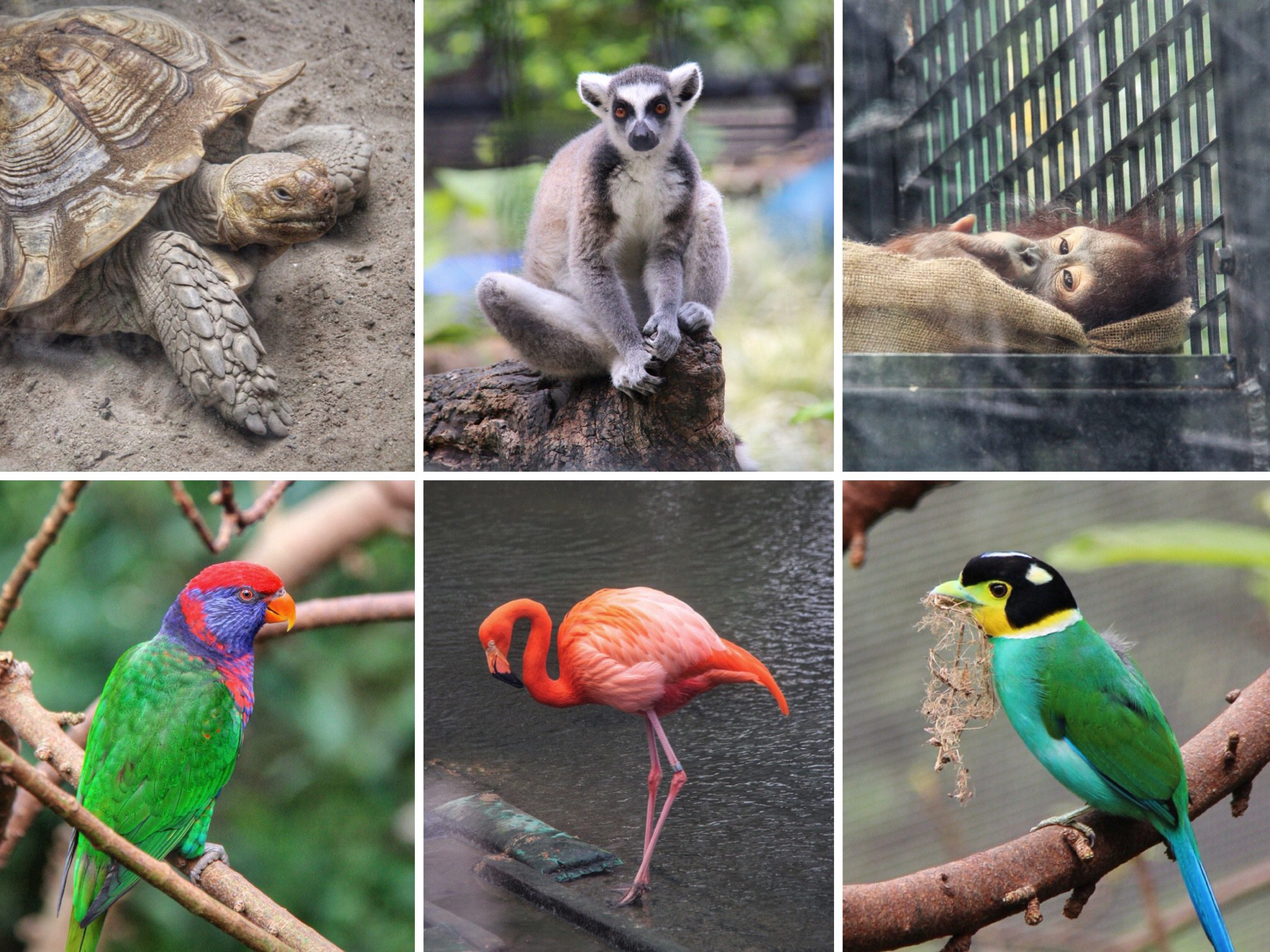 Animals from the Hong Kong Zoological and Edward Youde Aviary