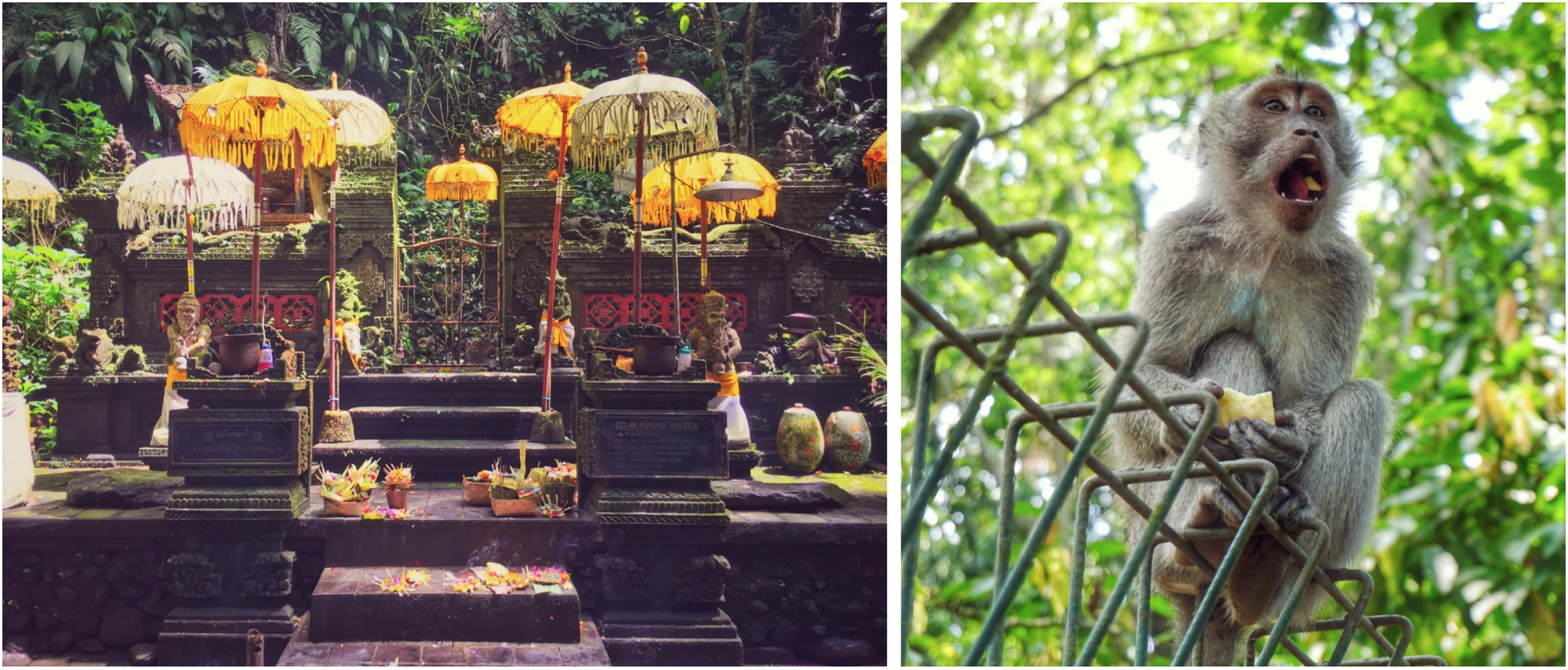Left: umbrellas and offerings at the Balinese water temple. Right: Balinese long-tailed monkey at the Sacred Monkey Forest Sanctuary.